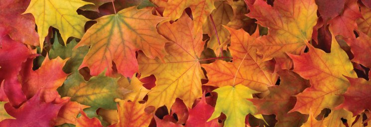 fall colors for your home