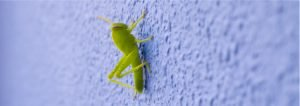 Exterior Paint Colors That Repel Bugs